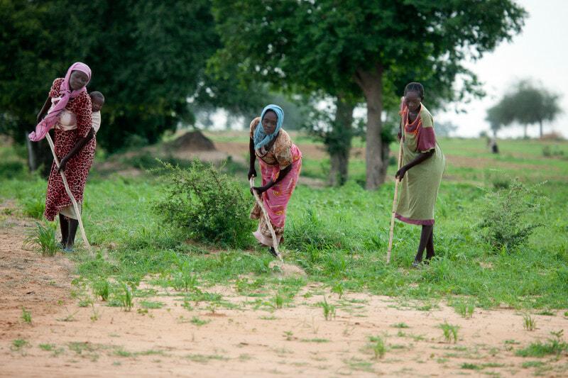 Farming in Gereida (South Darfur)