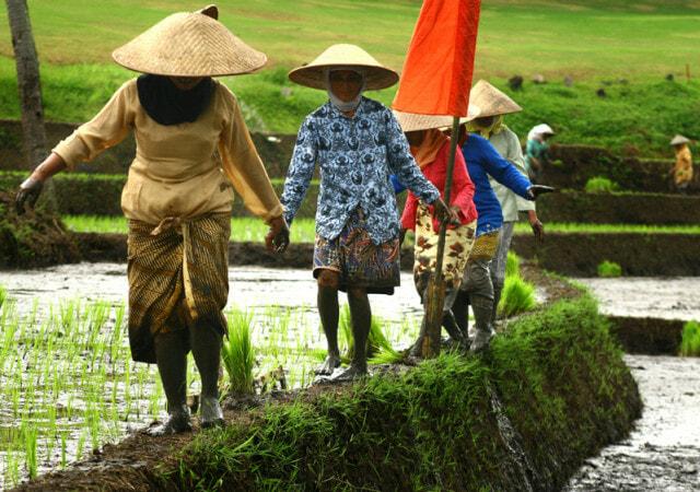 original_indonesian_farmer