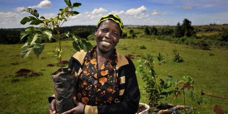 United Nations Forum on Forests Photo Competition  1 of 6 winning photos  Image title: Face of the Mau: Community Leader Planting Trees  Info:  Grace is a farmer from Kipilat village and a leading member of the forest community in Ainabkoi. Grace, works on a voluntary basis to support efforts to protect the forest. She provides both material support to Kenya Forest Service rangers and where possible gives information to the authorities on the activities of illegal loggers. This photo was part of an exhibition which featured portraits of people who depend on the Mau Forest in Kenya, one of the countryÕs most important water towers.