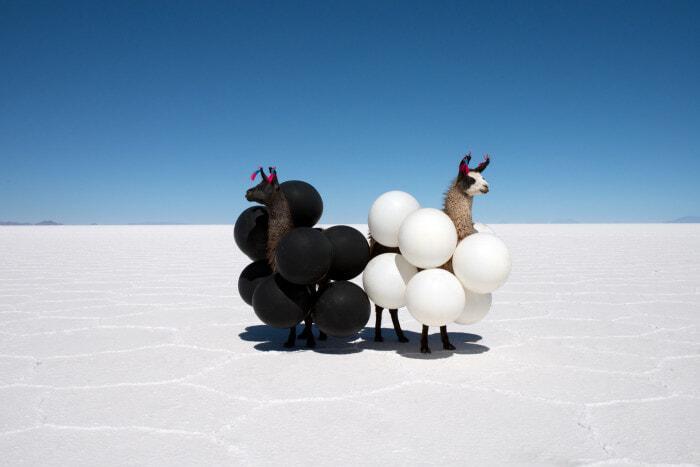 Llama-Black-and-White-Balloons