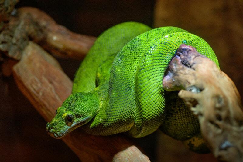 animal-zoo-green-predator
