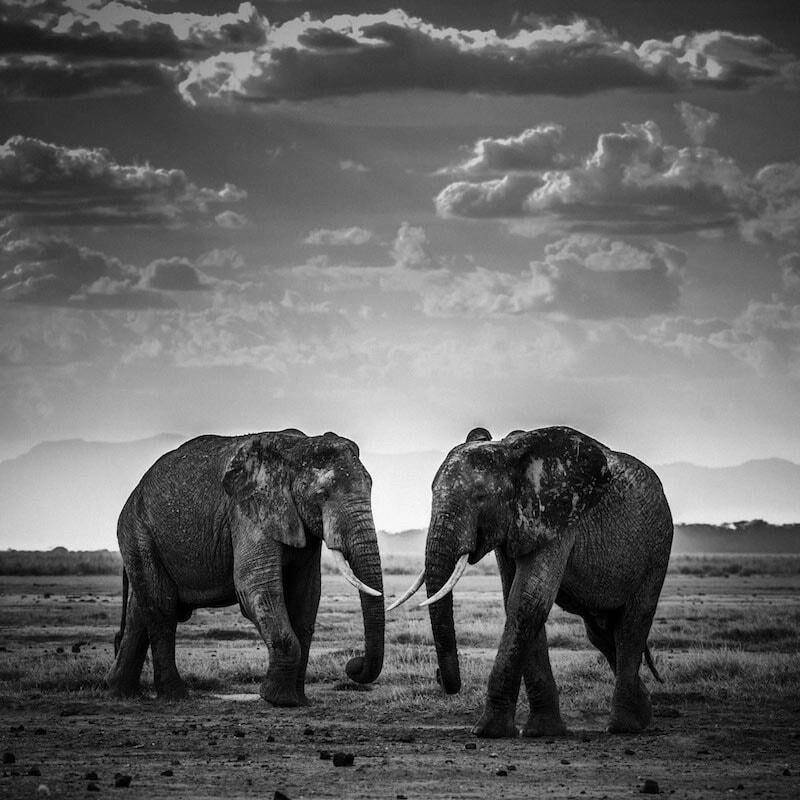 4818-Elephant-The road is closed, Kenya 2015 © Laurent Baheux