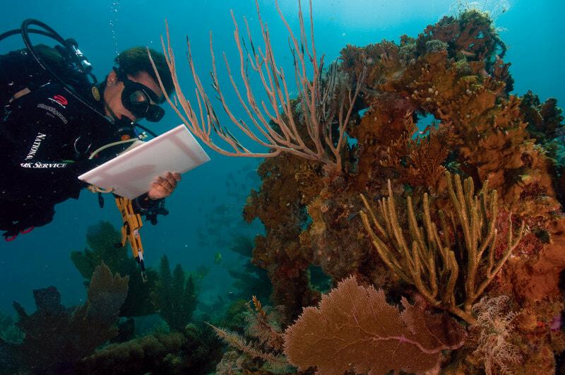 Coral-reef-measurments