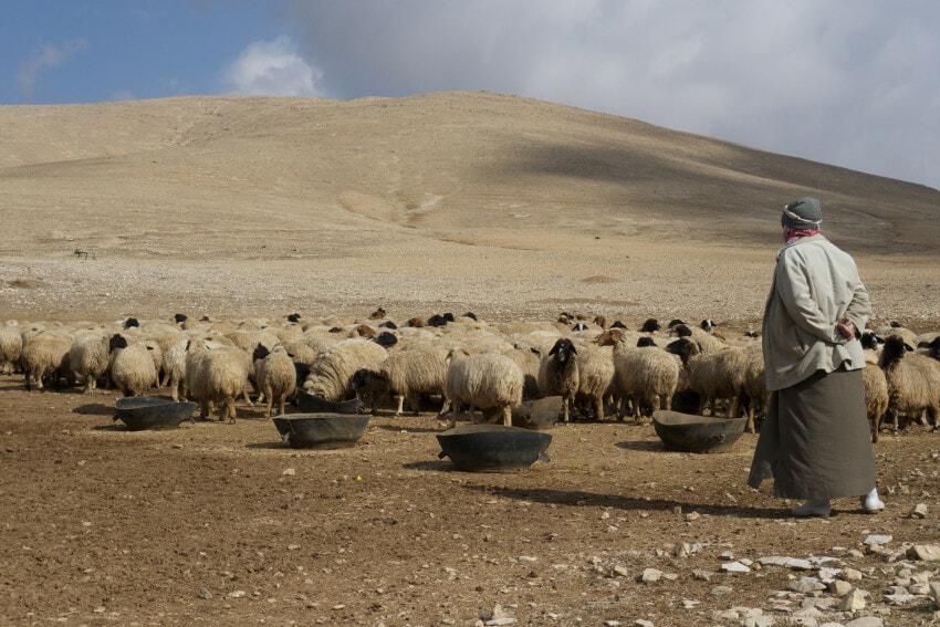 farm-syria-sdg6