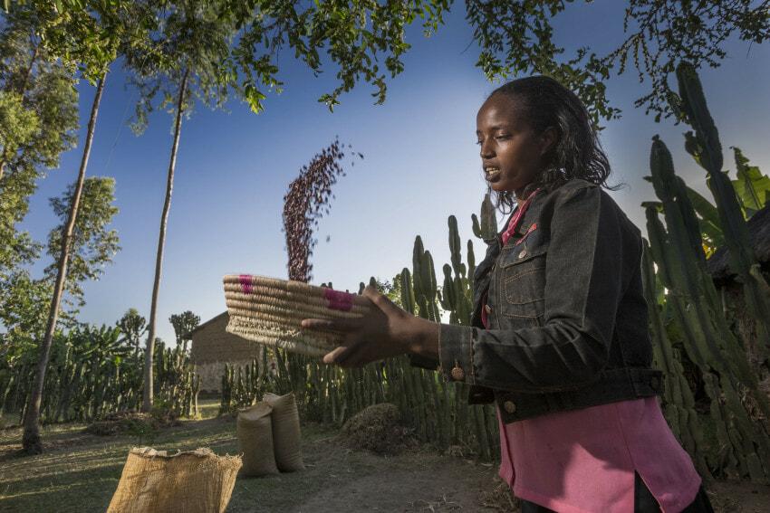 fao-food-security-ethiopia