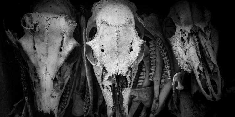 skulls, poetry, impakter