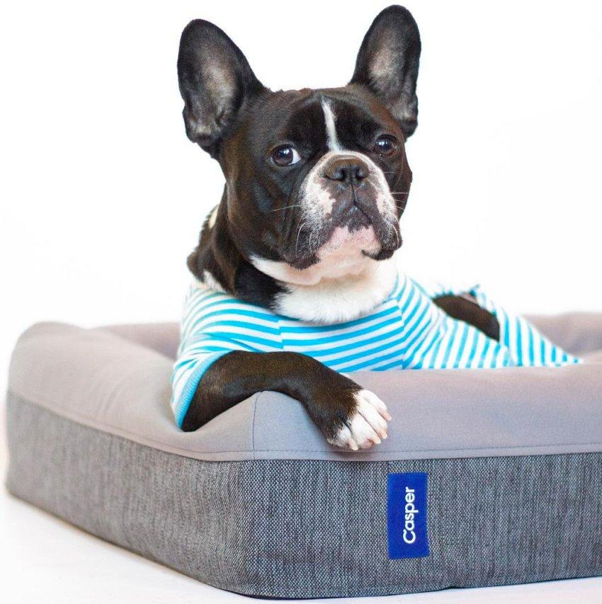 dogs, casper, bed, dog bed