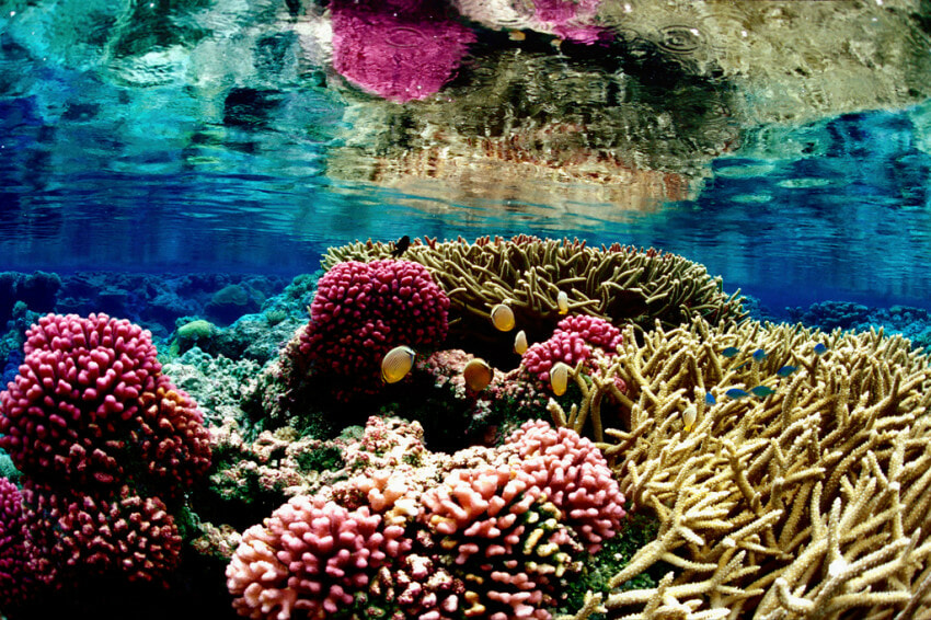 coral-reef-world-water-day