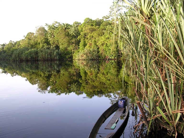 16-LVE- Pristine peatswamp forests are home to a wealth of wildlife species such as Tigers, Rhinoceroses and Orang-utans.