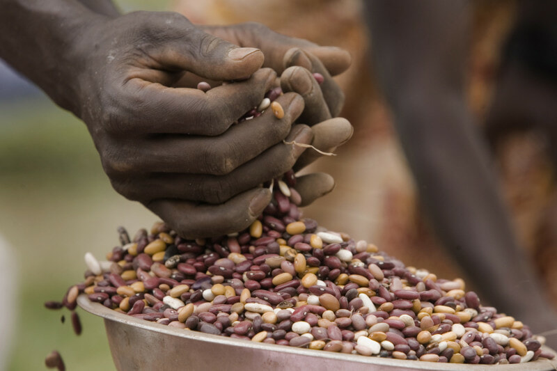 Weighing and distributing seed rations at a seed fair in rural Bujumbura.
