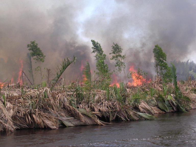 burning peatland in kalimantan, indonesia (pieter van eijk)