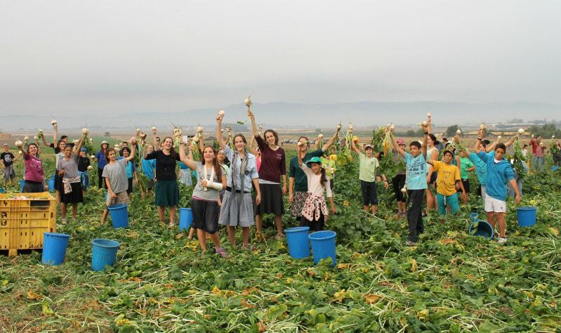 16 October 2013, Israel - Volunteers picking for the needy on Moshav Nahalal during Leket Israel's WFD Event.