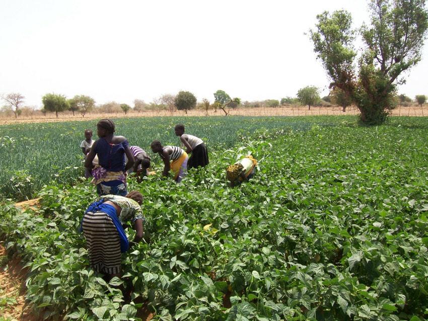 farmers in Burkina Faso