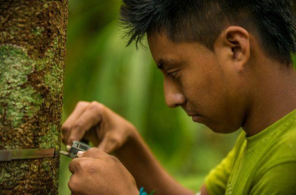 Rainforest Alliance Han de Groot