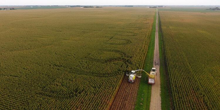 Crop Corn Harvest Farming Agriculture Corn Silage