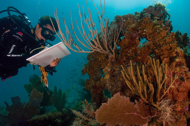 Australia's coral reefs