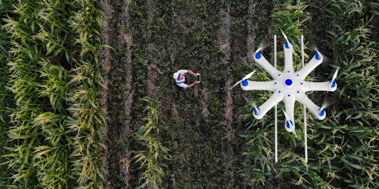 Farmer spraying his crops using a drone iStock-1128102492