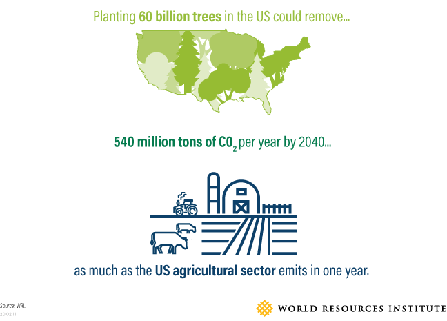 Graph showing effects of planting 60 billion trees in the US