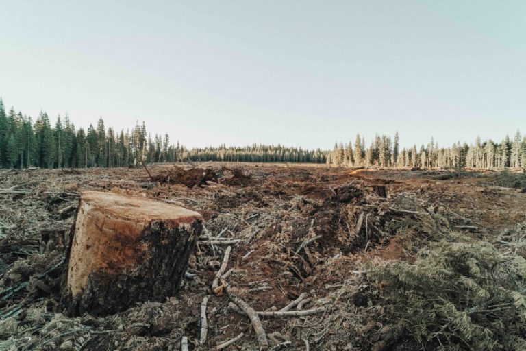 """Example of """"clear-cutting,"""" a style of deforestation"""