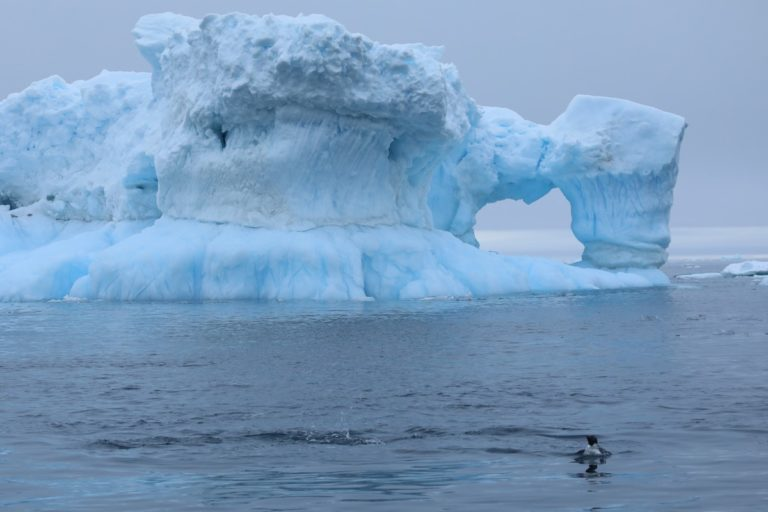 Ice loss from the Antarctic Ice Sheet has rapidly accelerated over the last four decades.