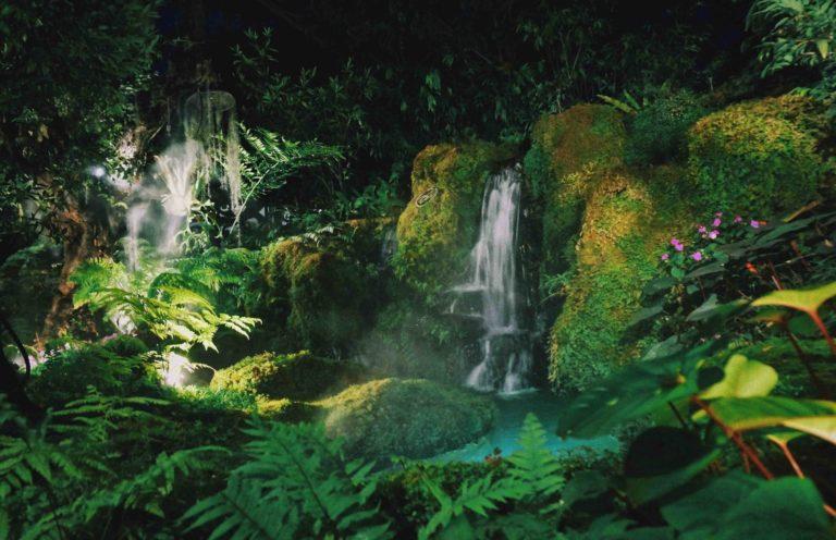 Chom Chiang Mai rainforest