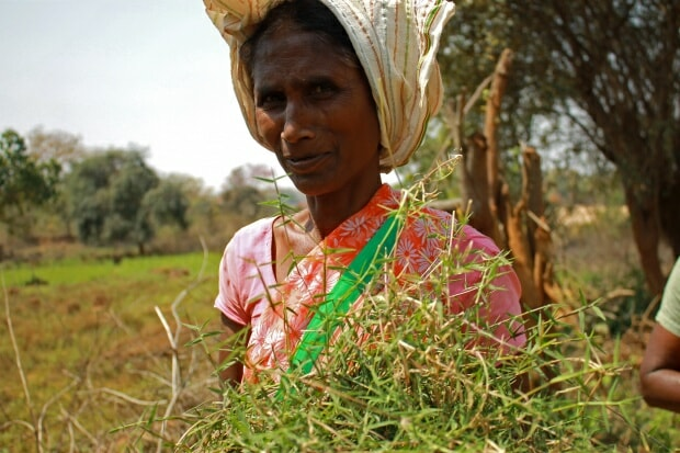 Crisis, such as COVID and climate change, offer an opportunity to not only support the immediate needs of women, but to rethink systems. Photo: S. Saini (CCAFS)