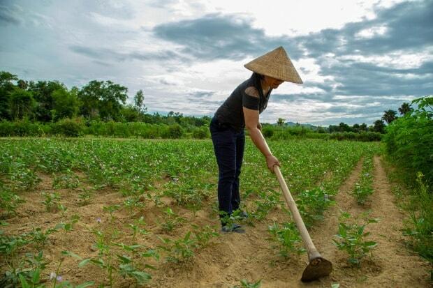 A female farmer works in her field near Xã Kỳ Sơn in the Ha Tinh province. Taken July 24th, 2019. Photo: J. Turner (CCAFS).