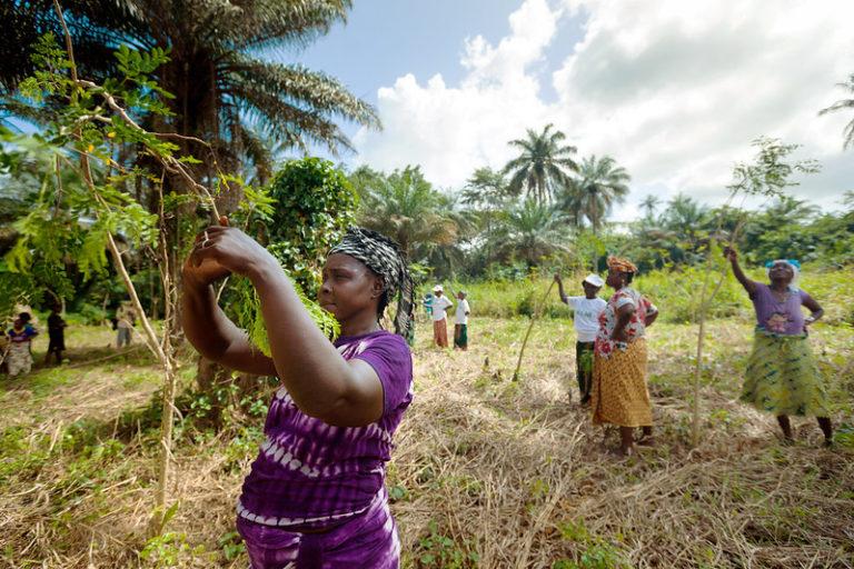 Rural Women's Cooperative Guinea encourage sustainable development