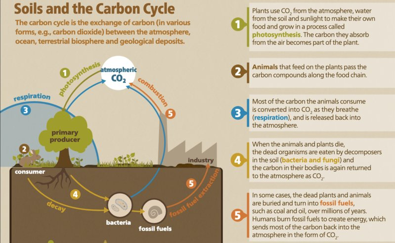 Soil and the Carbon Cycle