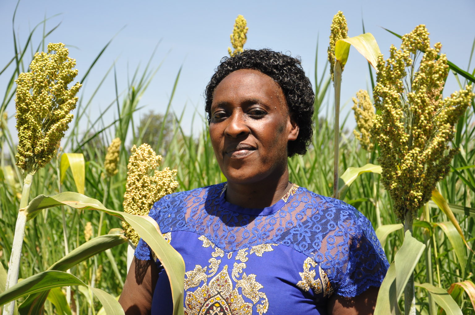 Susan is a sorghum farmer and buying agent for Shalem. This picture was taken by Kristin Williams, Communications Manager, during a visit to Shalem in July 2019.