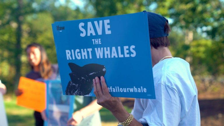 Save the right whales