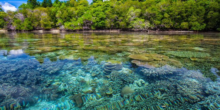 Sea corals