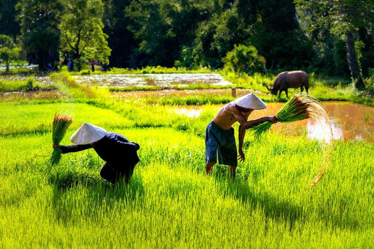 Farming Covid