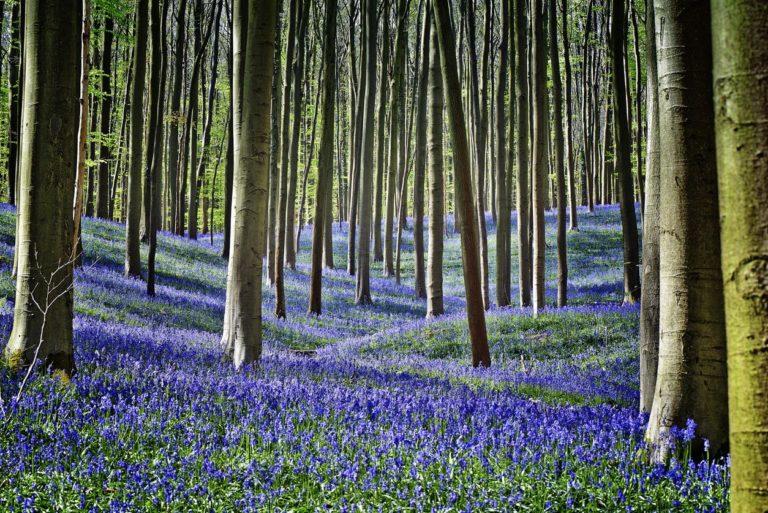 Forest NBI
