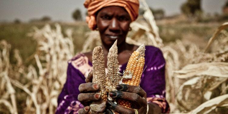 Sahel Food Crisis