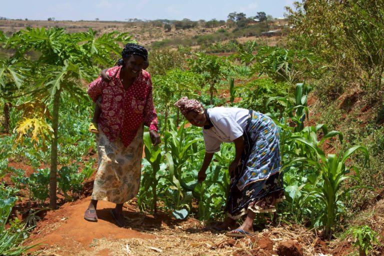 Small holder farmers in Kenya