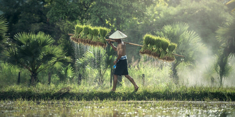 Traditional small holder farmers
