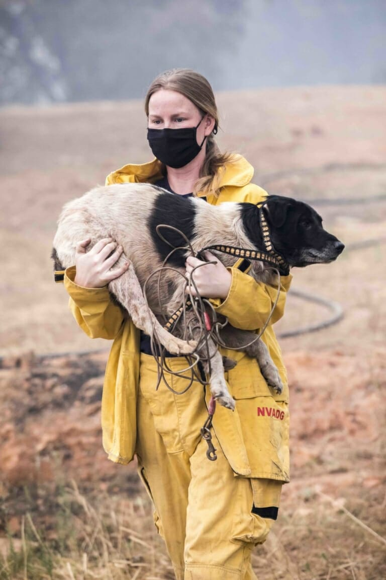 Woman saving an animal from a natural disaster