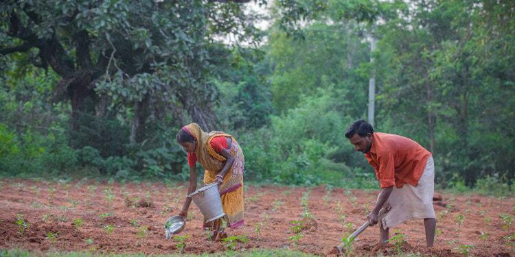 Budhuni Hansdah kitchen garden at Rangiam, Ganjam