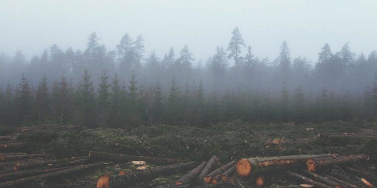 Carbon credit deforestation